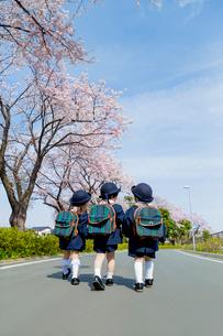 桜の咲く道を歩く新入園児の後ろ姿の写真素材 [FYI01703770]