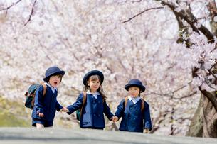 桜の咲く公園を歩く新入園児の写真素材 [FYI01703777]