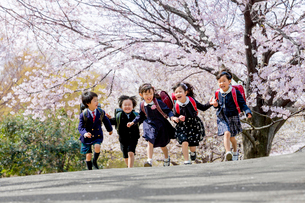 桜の咲く公園を走る新一年生の写真素材 [FYI01703794]