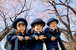 桜の咲く遊歩道で遊ぶ新入園児の写真素材 [FYI01703795]