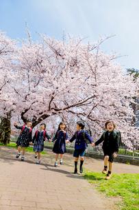 桜の咲く公園を走る新一年生の写真素材 [FYI01703798]