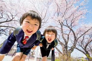 桜の咲く遊歩道で遊ぶ新一年生の写真素材 [FYI01703799]