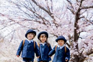 桜の咲く公園で遊ぶ新入園児の写真素材 [FYI01703813]