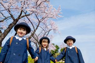 桜の咲く道を歩く新入園児の写真素材 [FYI01703823]
