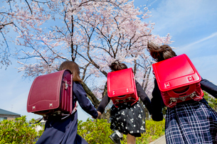 桜の咲く道を走る新一年生の後ろ姿の写真素材 [FYI01703836]