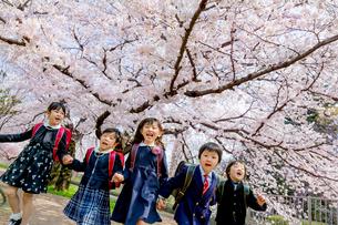 桜の咲く公園を走る新一年生の写真素材 [FYI01703949]