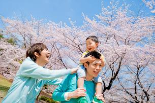 桜の咲く公園を息子を肩車して歩く3人家族の写真素材 [FYI01703954]