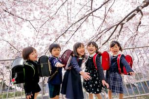 桜の咲く遊歩道で遊ぶ新一年生の写真素材 [FYI01703973]