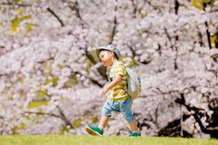 桜の咲く公園でリュックを背負って歩く男の子の写真素材 [FYI01704002]