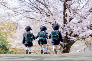 桜の咲く公園を歩く新入園児の後ろ姿の写真素材 [FYI01704010]