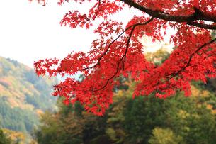 面合渓谷(紅葉)石鎚山の写真素材 [FYI01704033]