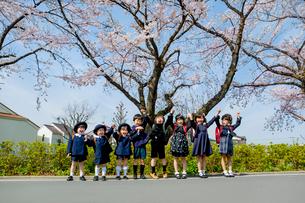 桜の咲く道で手をつなぐ新一年生と新入園児の写真素材 [FYI01704035]