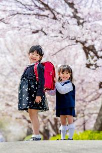 桜の咲く公園で遊ぶ新一年生と新入園児の姉妹の写真素材 [FYI01704060]