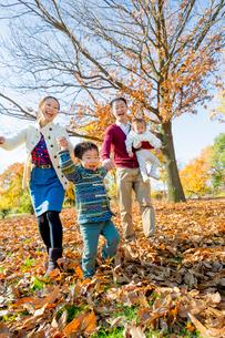 紅葉の公園を手をつないで歩く4人家族の写真素材 [FYI01704065]