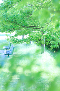 春の公園の写真素材 [FYI01704095]