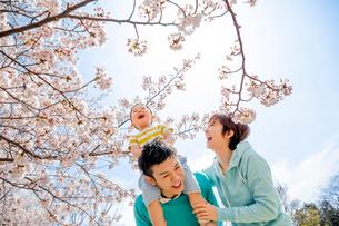 桜の咲く公園を息子を肩車して遊ぶ3人家族の写真素材 [FYI01704139]