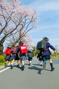 桜の咲く道を走る新一年生と新入園児の後ろ姿の写真素材 [FYI01704140]