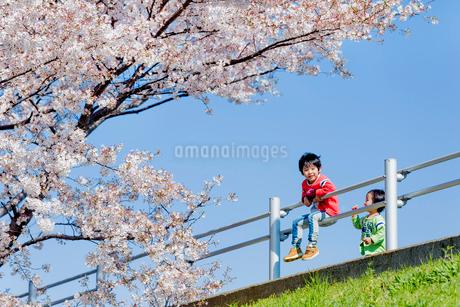 桜の咲く土手で遊ぶ兄弟の写真素材 [FYI01704168]