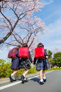 桜の咲く道を走る新一年生の後ろ姿の写真素材 [FYI01704171]