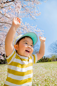 桜の咲く公園で両手を上げる男の子の写真素材 [FYI01704203]