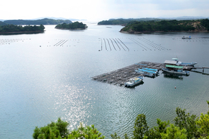 英虞湾に浮かぶ養殖筏の写真素材 [FYI01704251]