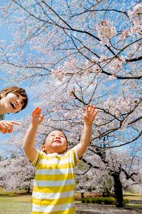 桜の咲く公園で遊ぶ母親と息子の写真素材 [FYI01704365]