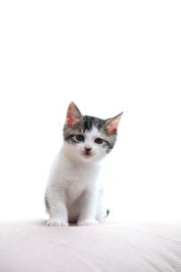警戒する子猫の写真素材 [FYI01704395]