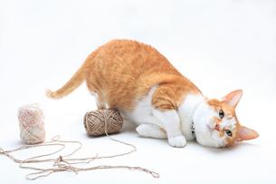 たわむれるネコの写真素材 [FYI01704577]