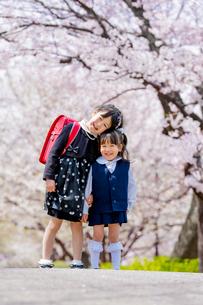 桜の咲く公園で遊ぶ新一年生と新入園児の姉妹の写真素材 [FYI01704585]