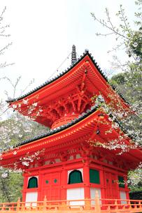 紀三井寺の多宝塔の写真素材 [FYI01704593]