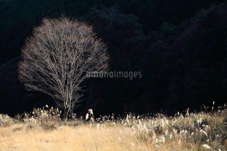 葉を落とした木の写真素材 [FYI01704624]