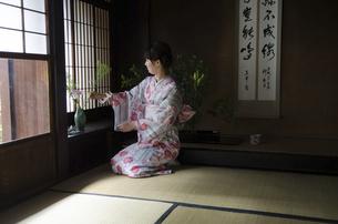 花瓶に花を生けている着物姿の女性の写真素材 [FYI01704683]