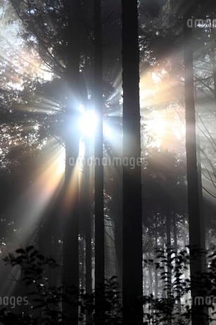 熊野古道から見た森の木漏れ日の写真素材 [FYI01704700]