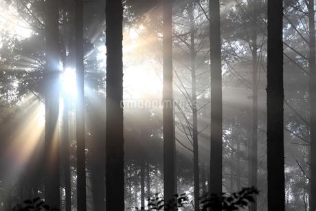 熊野古道から見た森の木漏れ日の写真素材 [FYI01704821]