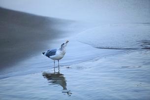 渚とカモメの写真素材 [FYI01704885]