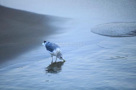 渚とカモメの写真素材 [FYI01704890]