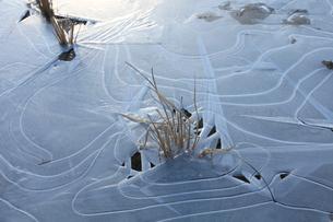 凍る水田の写真素材 [FYI01705362]