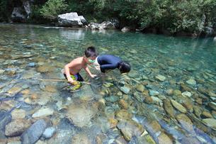 たも網で魚をすくう子どもの写真素材 [FYI01705643]