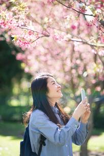 スマホで写真を撮っている女性の写真素材 [FYI01705841]