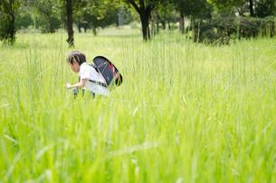 ランドセルを背負って草むらで遊ぶ男の子の写真素材 [FYI01705983]