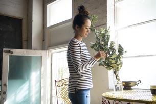 ユーカリを花瓶に生けている女性の写真素材 [FYI01706021]