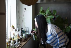 多肉植物にスプレーをしている女性の写真素材 [FYI01706215]