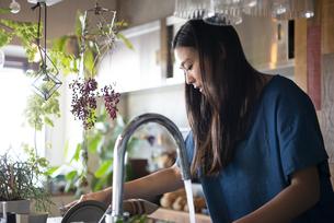 キッチンで洗い物をしている女性の写真素材 [FYI01706554]