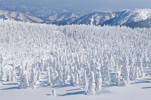 蔵王の樹氷の写真素材 [FYI01706899]