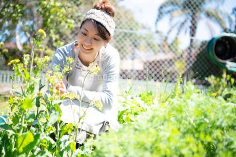 畑の世話をしている女性の写真素材 [FYI01706973]