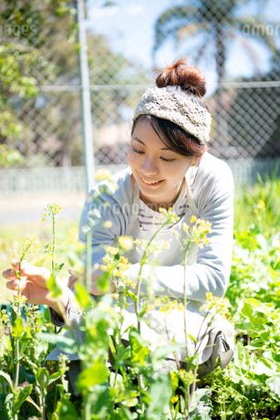 畑の世話をしている女性の写真素材 [FYI01707205]