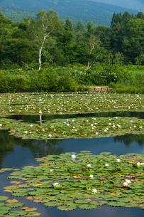 スイレン咲くいもり池の写真素材 [FYI01707413]