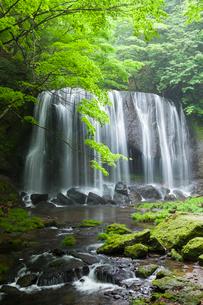 新緑の達沢不動滝の写真素材 [FYI01707600]