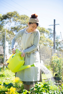 畑に水をあげている女性の写真素材 [FYI01707619]