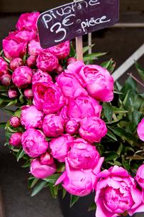 パリの花やのシャクヤクの写真素材 [FYI01708041]